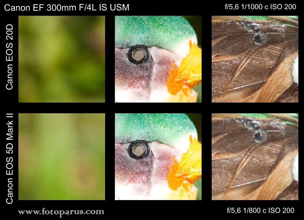 crop_vs_full300mm