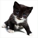 Котенок, kitten