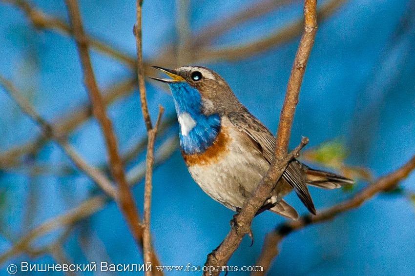 Фото птицы подмосковья зимой