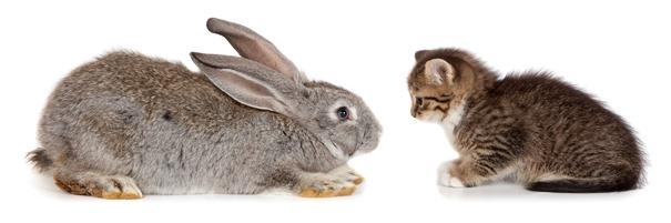 Котята и кролик.  Kitten and Rabbit