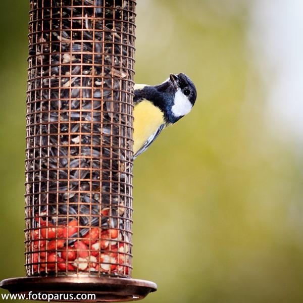 BirdFeeder (8)