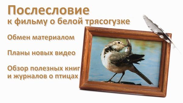 2016-11-17 Послесловие к фильму о трясогузке