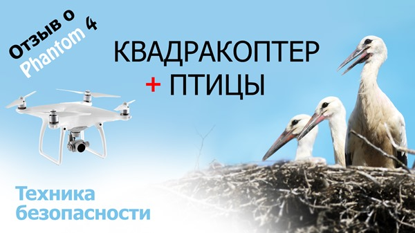 Квадракоптер птицы