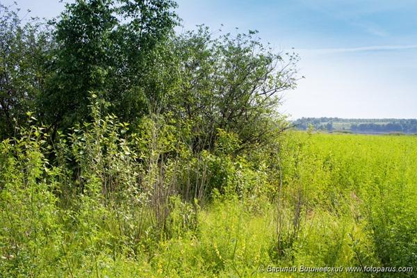 Гнездовой биотоп, место обитания, Habitat, breeding habitat, nesting habitat