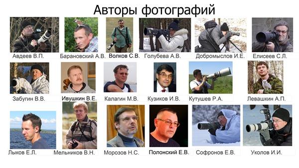 Книга Птицы Москвы и Подмосковья Авторы фотографий