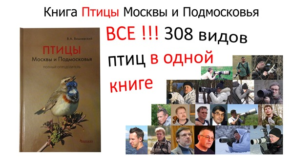 Книга Птицы Москвы и Подмосковья-ОБЛОЖКА 3840х2160