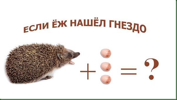 4k-Ежик-под-гнездом-жулана