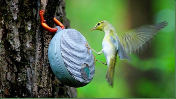 2018-05-27 Привлечение птиц на голос. Как не навредить