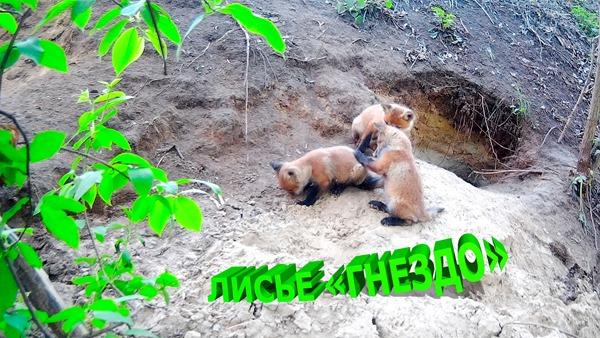 2019-10-06 Лисье гнездо