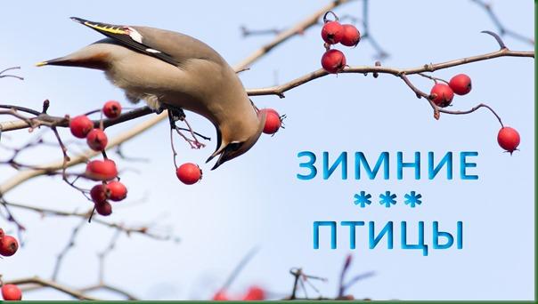 2019-12-07-Зимние-птицы