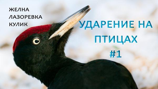 2019-12-20-ЖелнаЛазоревкаКулик