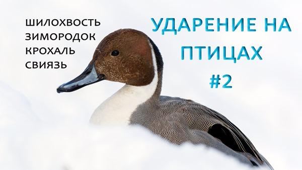 2019-12-25-Зимородок-и-др-Ударение-2