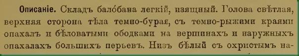 Мензбир-Балобан2