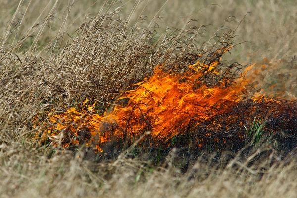 Горит трава. grassland fire