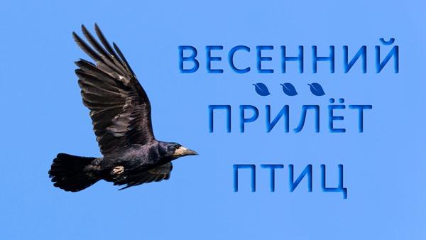2020-04-13-Весенний-Прилет-птиц