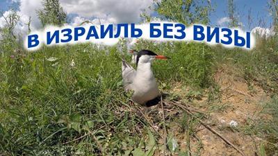 2020-07-01-Остров-Крачек