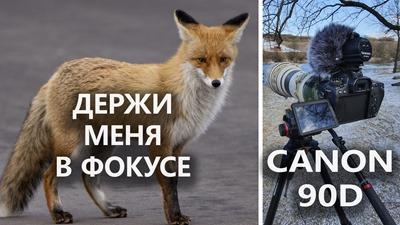 2020-09-13 Canon 90D отзыв спустя год