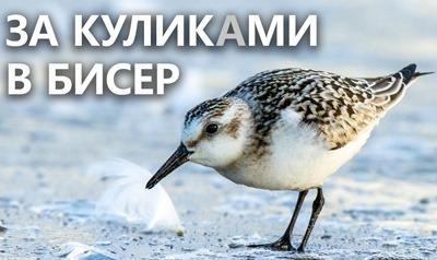 2020-09-20-Бисер-Кулики