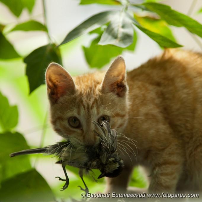 Where To Buy Wild Kitty Cat Food